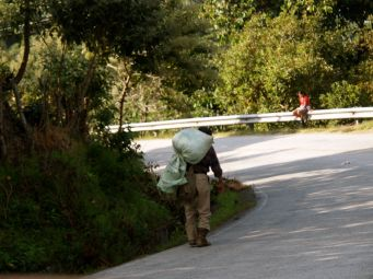 Worker carrying down his daily harvest.